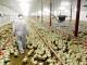 Illustratie, Is goede veehouderij duurzame veehouderij?